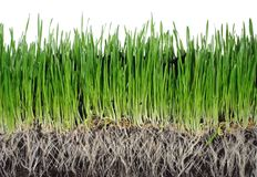 Grass From Roots Stock Photography