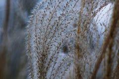 Grass fronds