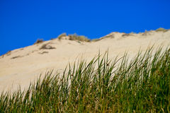 Grass in front of dune Stock Image