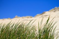 Grass in front of dune Royalty Free Stock Image