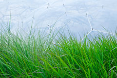 Grass in front of Eden Project. Grass in front of one of the two big biomes. Eden Project is situated in Cornwall, England stock photo