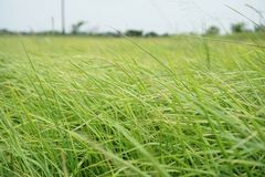 Grass at the front of the landscape blurred. royalty free stock photography