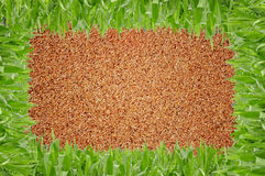 Grass in front of sand background Stock Photos
