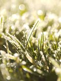 Grass frost Royalty Free Stock Photos