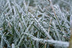 Grass frost close-up Royalty Free Stock Images
