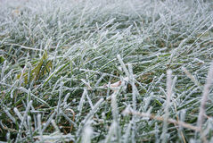 Grass frost Stock Image