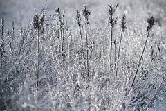 Grass after frost. The grass was covered with ice Royalty Free Stock Image