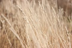 Grass with frost. Winter came unexpectedly. Dried grass. headpiece, background royalty free stock photography