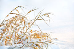 Grass is frozen Royalty Free Stock Images