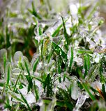 Grass. Frozen grass covered with ice Stock Image