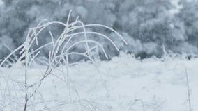 Grass frozen ice snow winter pretty stock video footage