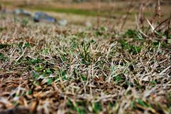 Grass with full blur in the field. royalty free stock photo