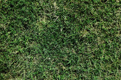 Grass Full Of Frame Good For Textures And Backgrounds Stock Image