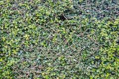 Grass full frame Royalty Free Stock Image