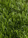 Grass full frame Stock Photo