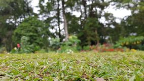 Grass garden abstract background stock image