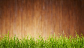 Grass and garden background Royalty Free Stock Images