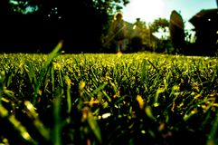 Grass in the garden close up. With silhouette in the background royalty free stock photo
