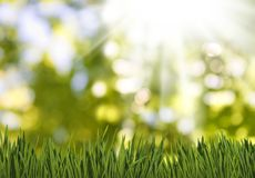 Grass in garden on a green blurred background. Grass in the garden on a green blurred background royalty free stock images