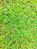 Grass in garden Stock Photo
