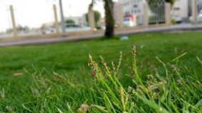 Grass garden stock photos