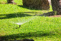 Grass garden spring water Stock Image