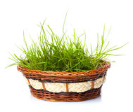 Grass in gasket Stock Image