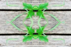 grass geometry figure reflection shapes symbol logo on wooden bo