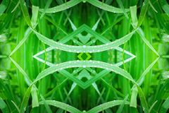 grass geometry shape reflection shapes symbol logo. ecology, health, green energy concept.