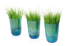 Grass in Glass Royalty Free Stock Photos