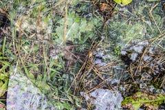 Grass glass texture Stock Photos