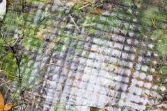 Grass glass texture Stock Image