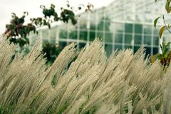 Grass and glasshouse, light colors Stock Photos