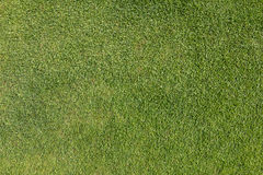 Grass on golf course putting  green Stock Image