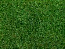 Grass on a golf field. Green grass on a golf field - top view Royalty Free Stock Images