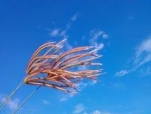Flower grasses blue sky. Good air nature Stock Photos