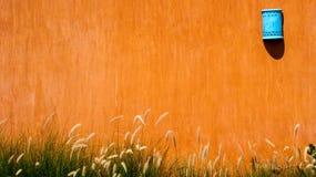 Grass, Grass Family, Field, Orange Stock Images