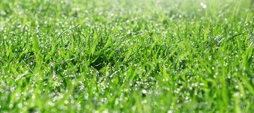 Grass. On a green background Royalty Free Stock Image