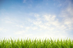 Grass grass under blue sky and clouds Royalty Free Stock Images
