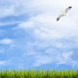 Grass grass under blue sky, clouds and bird Royalty Free Stock Images