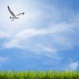 Grass grass under blue sky, clouds and bird Royalty Free Stock Photos
