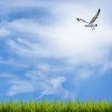 Grass grass under blue sky, clouds and bird Stock Photos