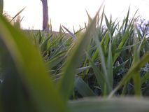 Grass. Land Ants view sunset Stock Photo