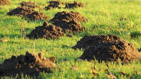 Grass, Grassland, Ecosystem, Field stock photos