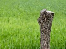 Grass, Grassland, Field, Grass Family Stock Photo