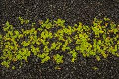 Grass on gravel Stock Image