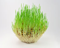 Grass on a gray background Royalty Free Stock Photography