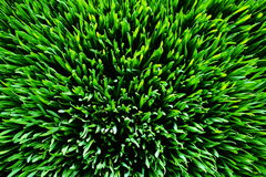 Grass green 1 Stock Photo