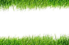 Grass green Royalty Free Stock Image