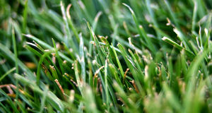 Grass green. Grass in the field royalty free stock images